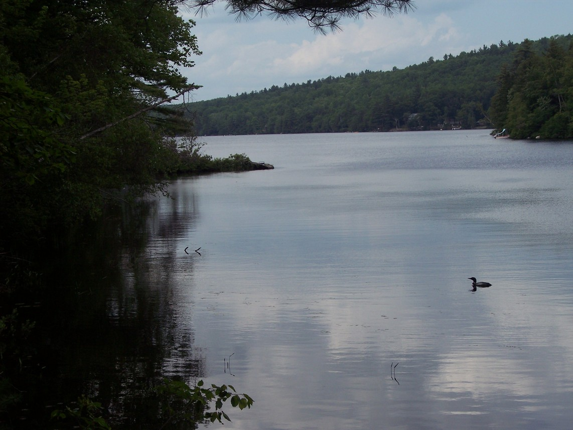 Greenwood, ME: Loon on Twitchell Pond