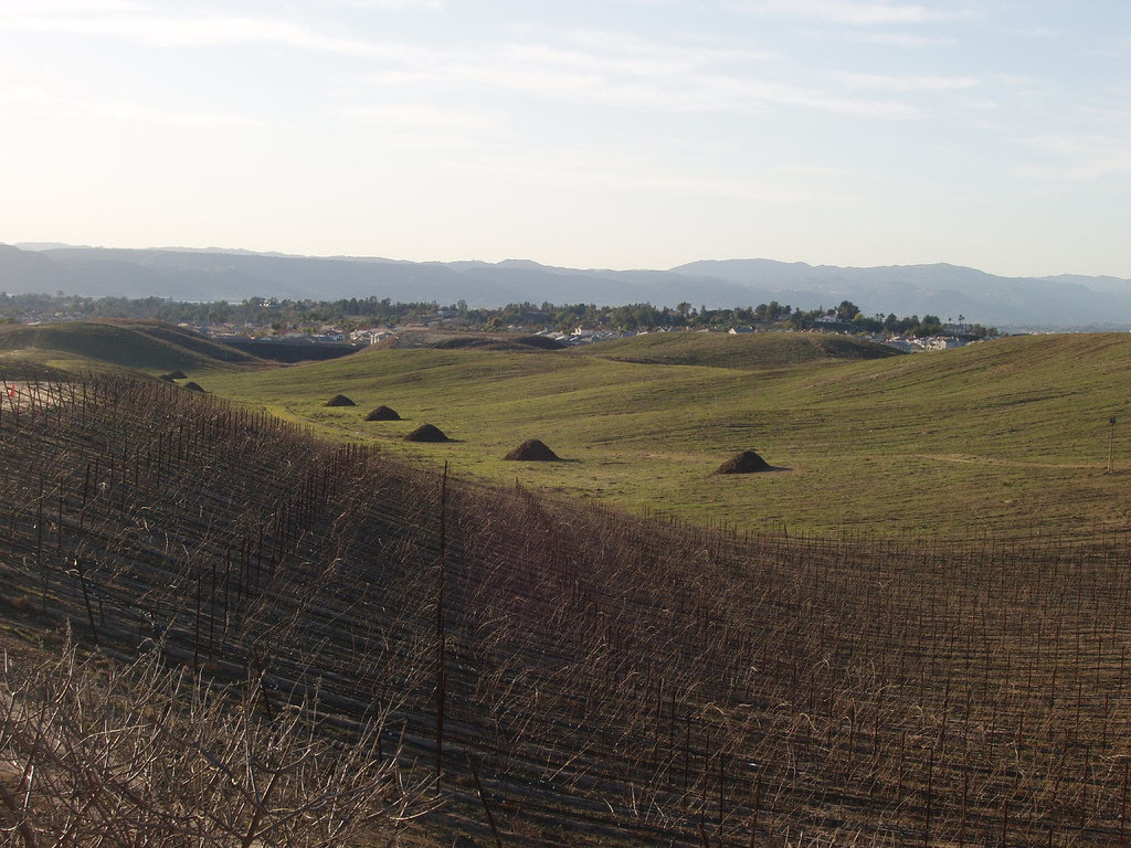 Temecula, CA : Callaway Vineyards