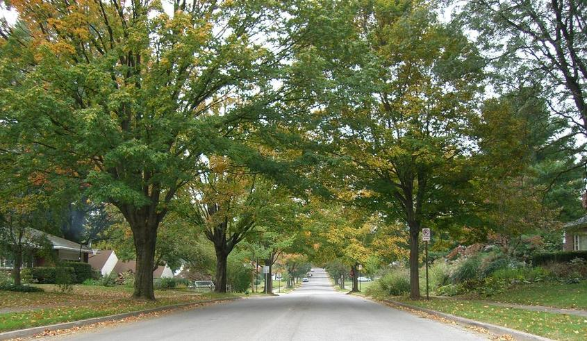 State College, PA : Maple trees along McCormick Avenue in State College, PA