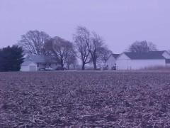 Morrisonville, IL : Typical Morrisonville Farm