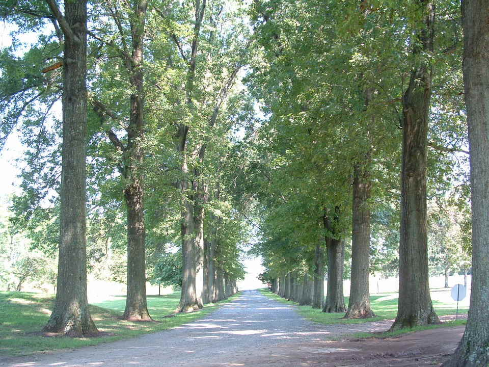 Skippack, PA : The Old Driveway into Skippack Golf Course (August 2003)