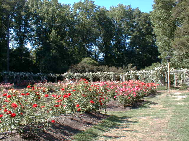 raleigh nc raleigh rose garden photo picture image north carolina at city