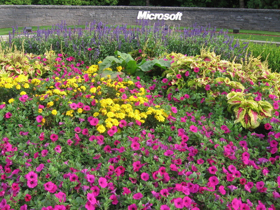 Redmond, WA : Fall in Redmond Around Microsoft