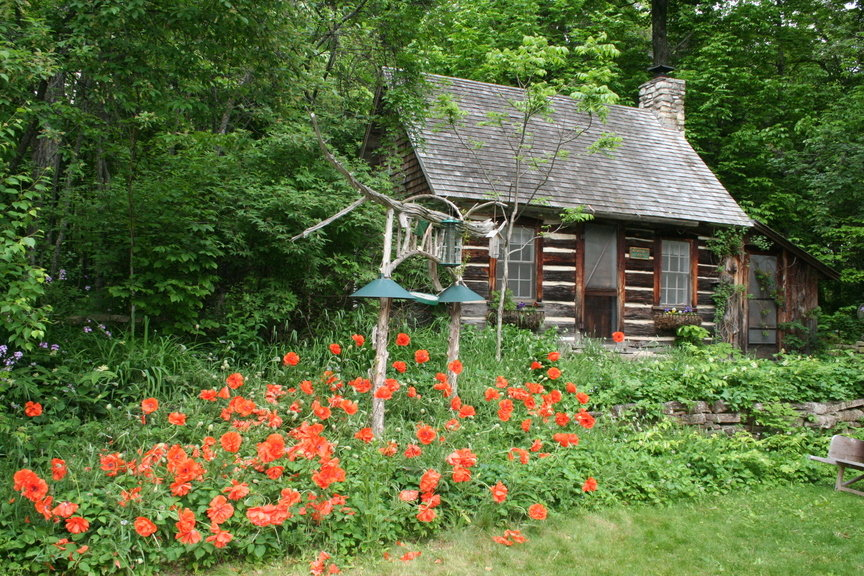 Liberty Grove, WI: Spring Poppies at the Clearing Folk School in Liberty Grove, Wi