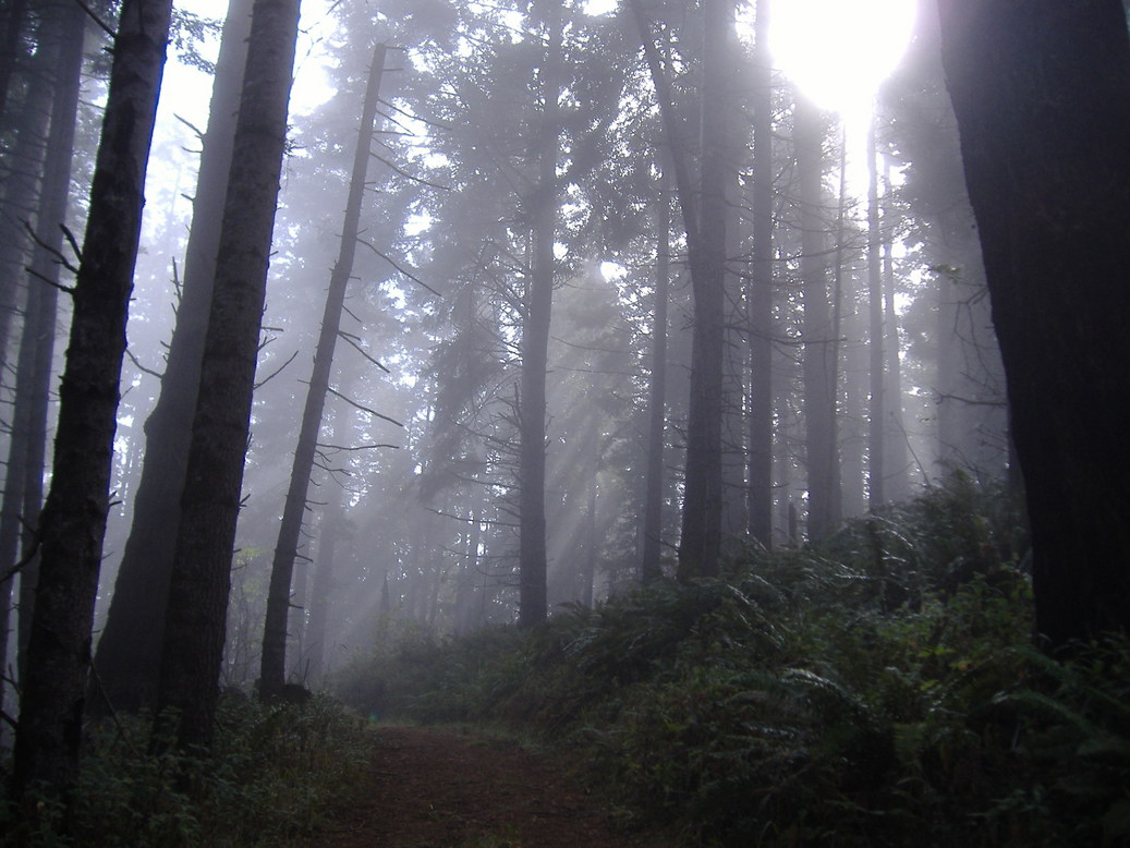 Fort Bragg, CA : The Forest of Fort Bragg