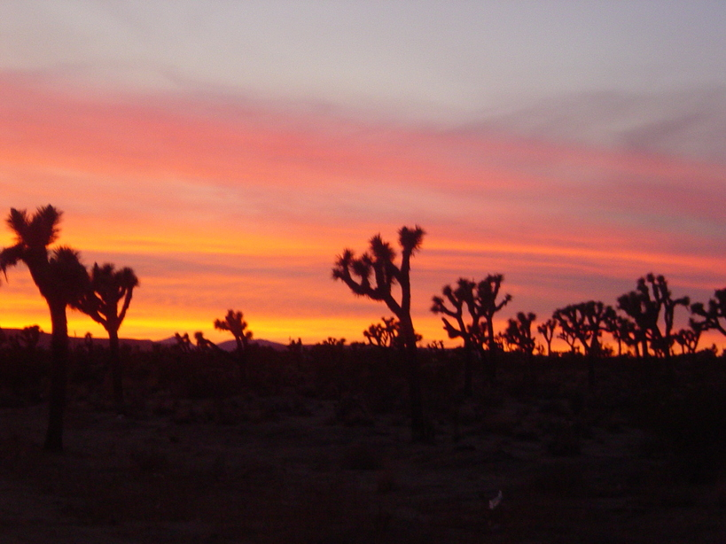 Yucca Valley, CA : Yucca Valley at Sunset