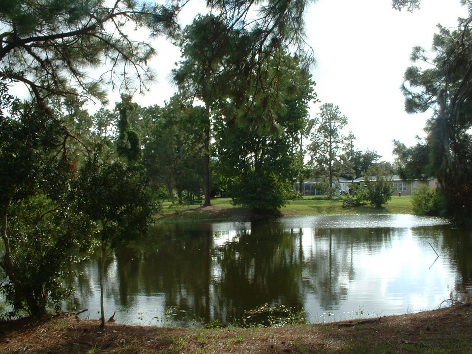 Holiday, FL: Cypress Lake Park Pond