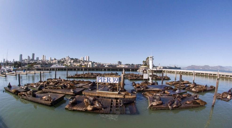 San Francisco, CA: Pier39
