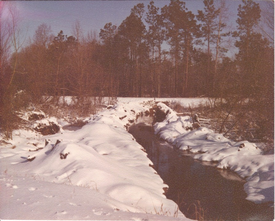 Portal, GA : Creek in Winter