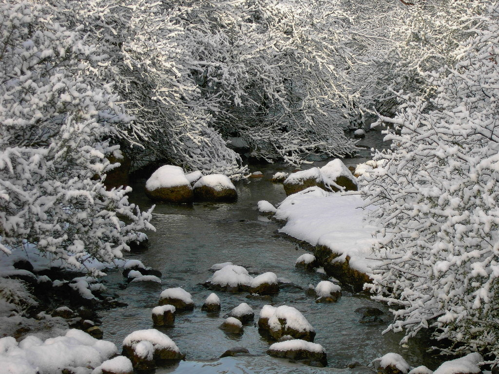Shingletown, CA : Creek in winter in Shingletown
