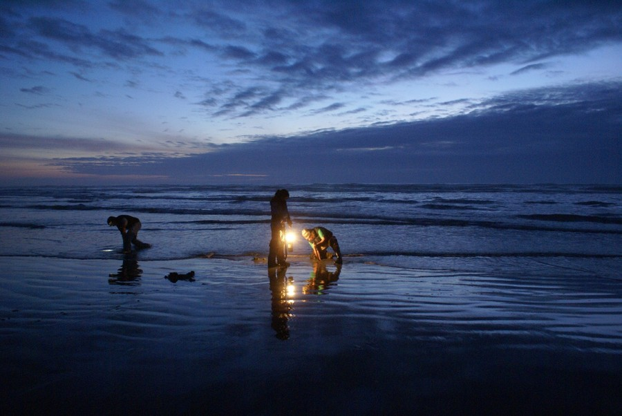 Ocean Shores, WA : night razor clam dig