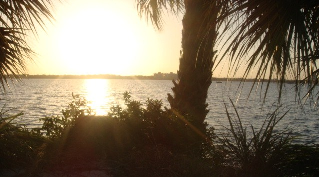 Merritt Island, FL : Another photo of my backyard!