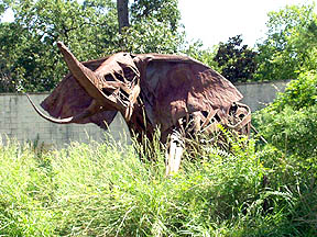 Houston, TX : Elephant at the Back Entrance to the Zoo
