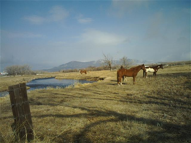 Lewistown, MT : Spring Creek and horse pasture