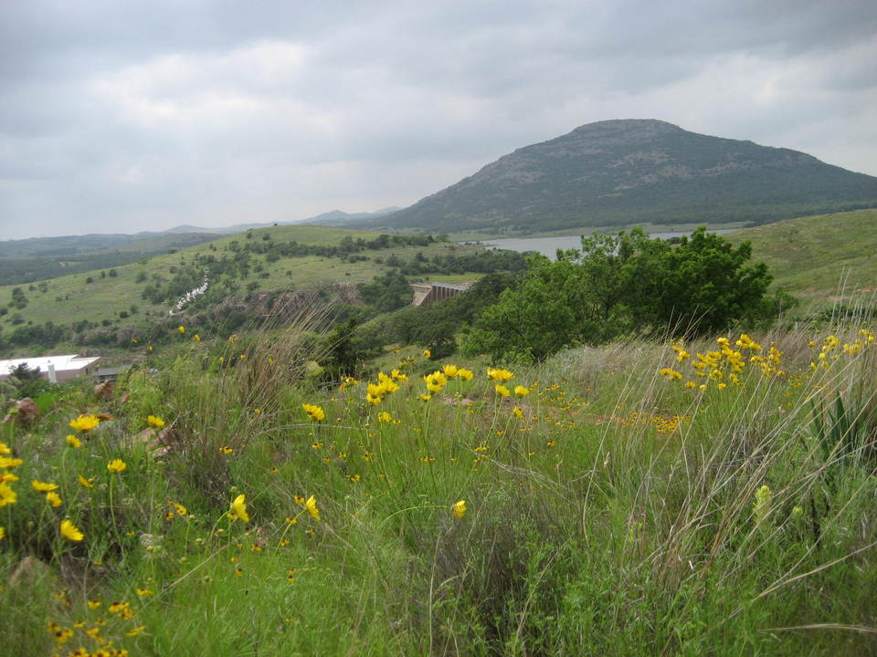 Medicine Park, OK: Spring Wild Flowers and Mt Scott
