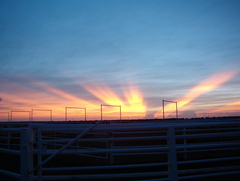 Pampa, TX: Sunrise at the feedlot