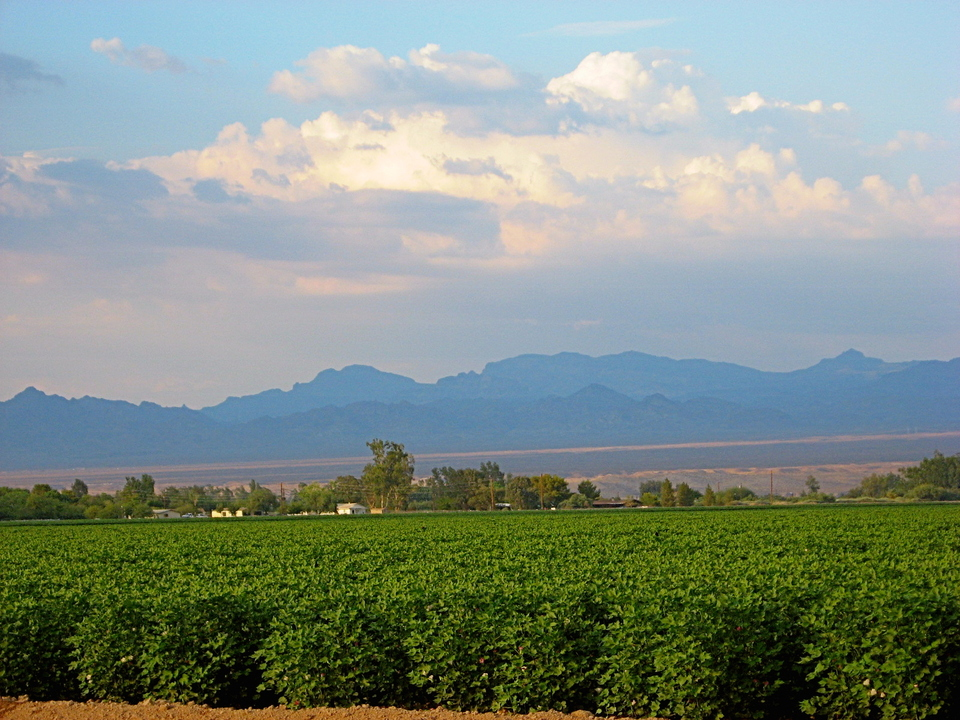 Mohave Valley, AZ : Valley of Cotton