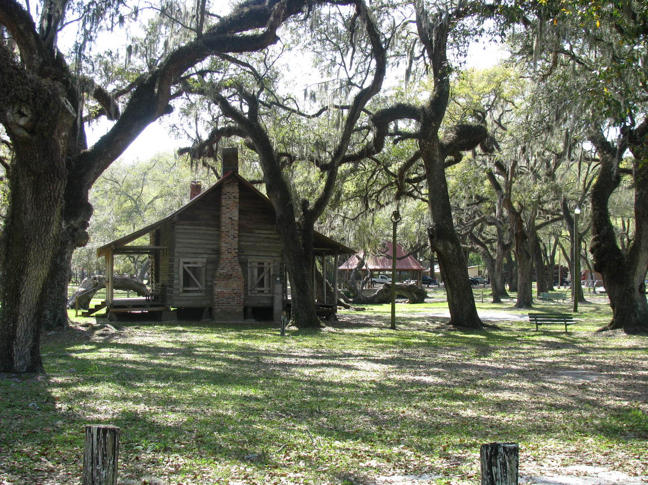 Mayo, FL : Old cabin in Mayo town park with an array of beautiful figured trees.