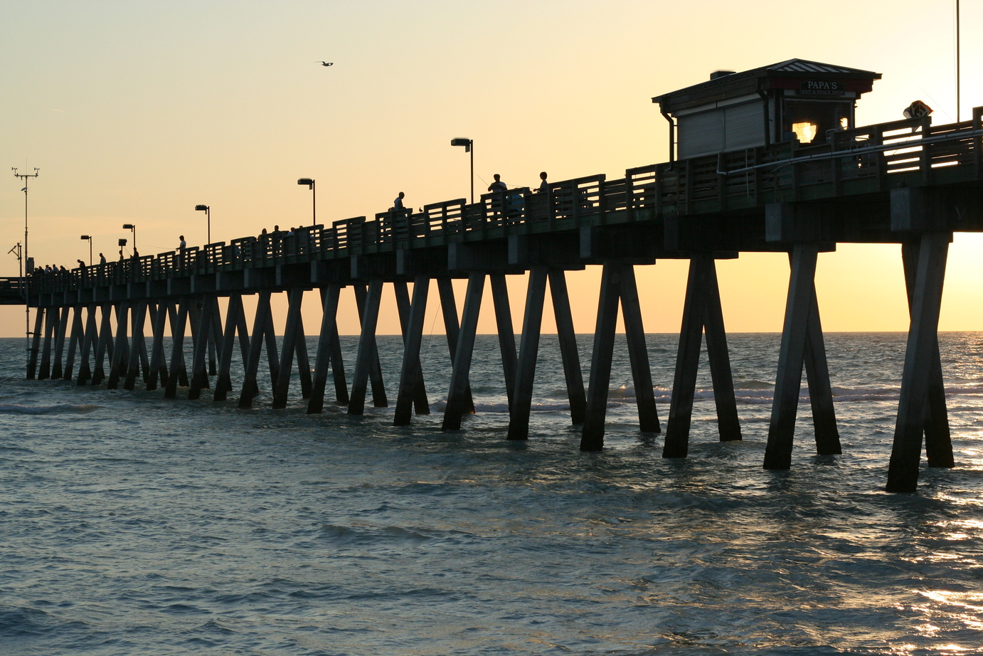 Venice, FL : Sharky's Pier
