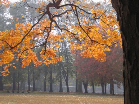 Nutley, NJ: A beautiful, foggy, Fall morning in the circle by the baseball diamonds.