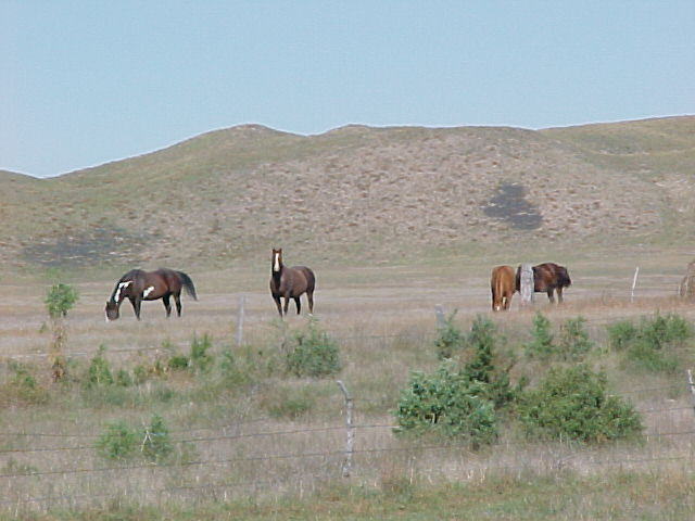 Alliance, NE : Horses in the nearby Sandhills east of Alliance