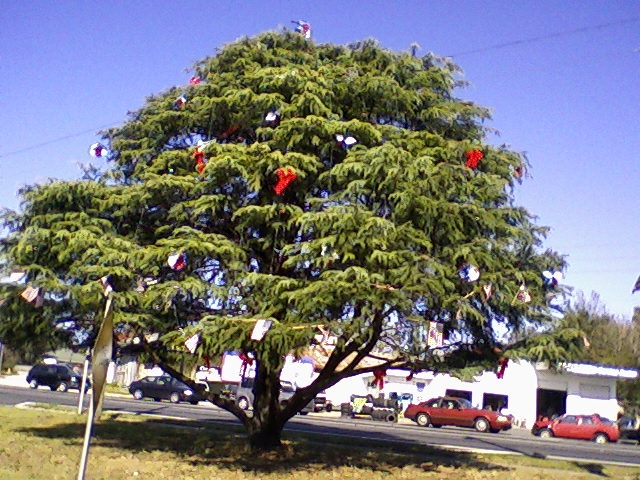 Belleview, FL: Tree decorated for Christmas 2008 with American Flags. All red, white and blue!