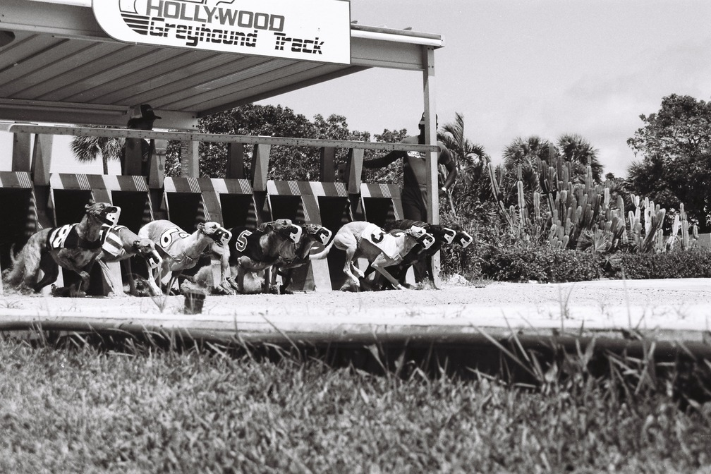 Hollywood, FL : The Dog Track on Pembroke and US1
