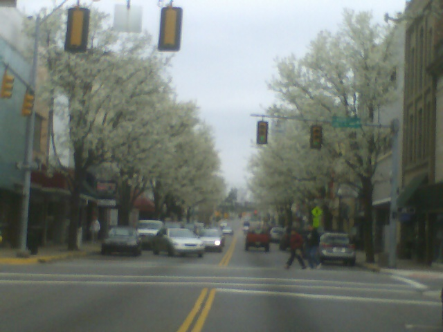 Bristol, TN : Pear trees blossoming in the spring looking East State Street