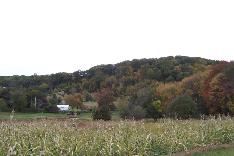 Newtown, CT : Hillside in Autumn