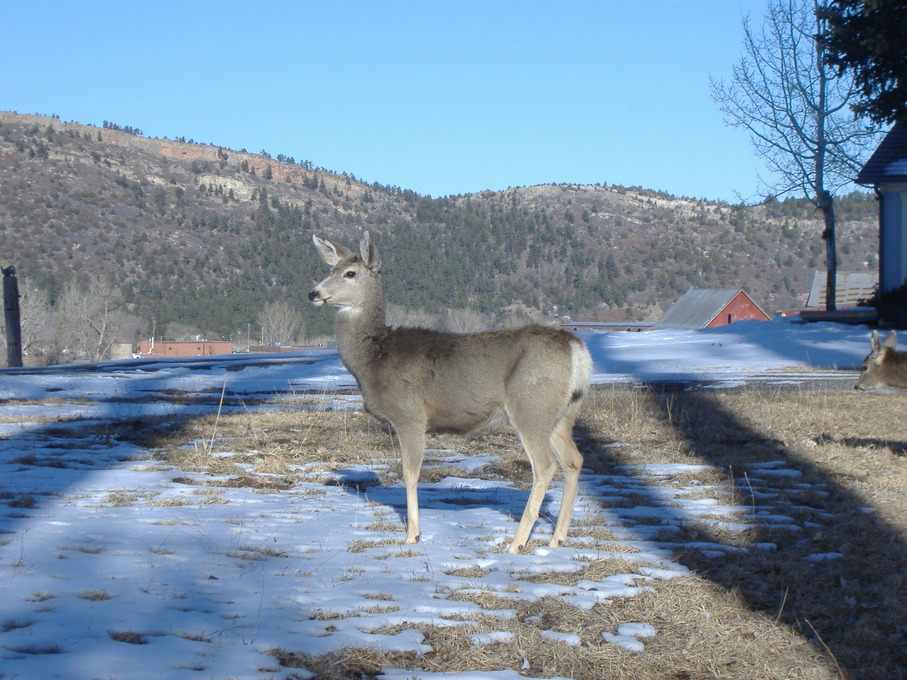 Beulah Valley, CO : Outside my children's house, a nice Feb morning in 2010