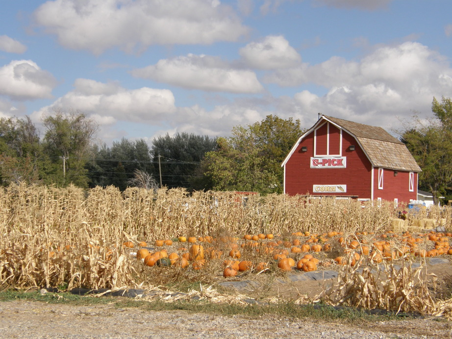 Idaho Falls, ID : A pumpkin patch close to home, in fact it is located on the road behind the Idaho Fall Zoo. It is a great place to take your family to pick pumpkins from the vines. It is a beautiful spot to capture a photo with your family and create many memories.