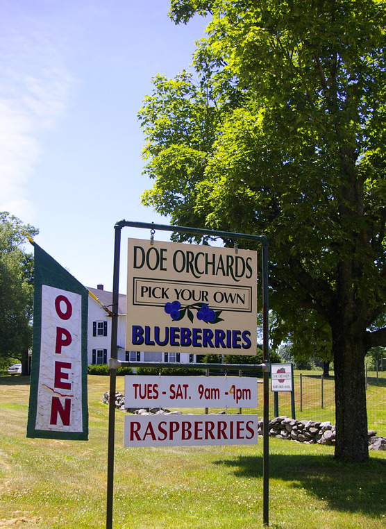 Harvard, MA : Doe Orchards July 2010