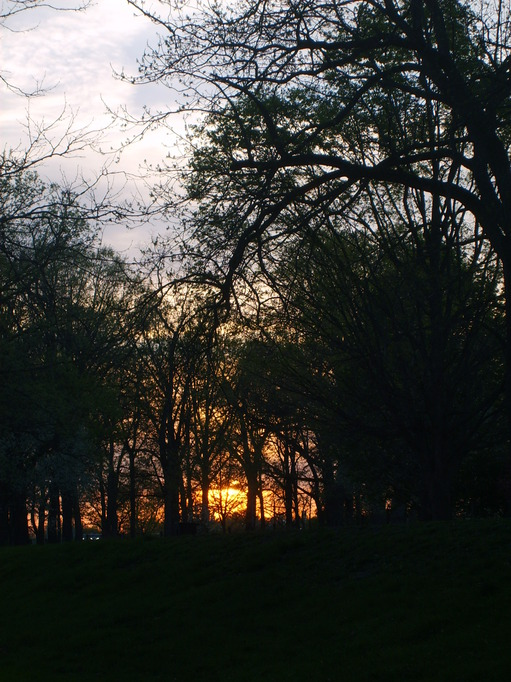 Muncie, IN: sunset through the trees at white river