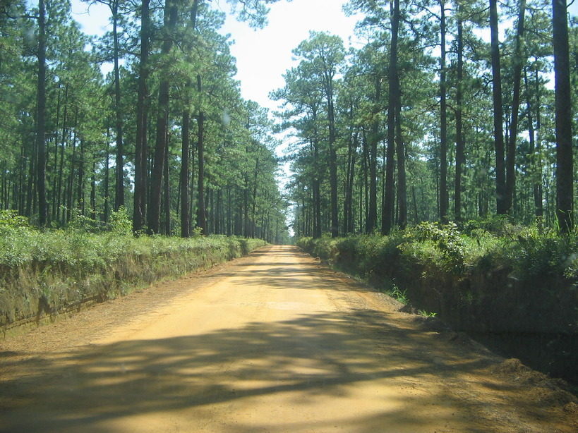 Thomasville, GA : Just another beautiful country back road