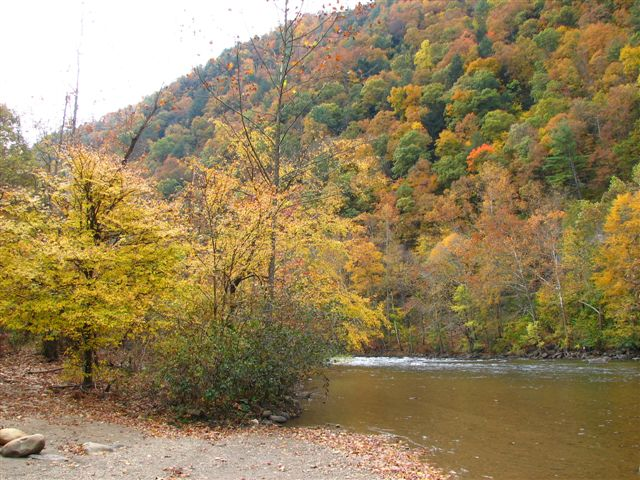 Erwin Tn Fall Colors By The Nolichucky River Photo