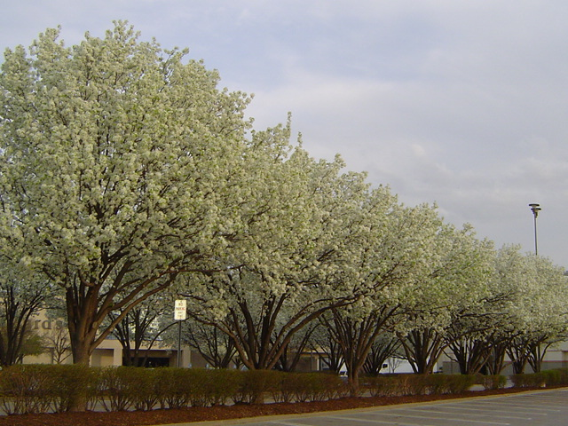 St. Peters, MO: Mid Rivers Mall parking lot in spring of 2007