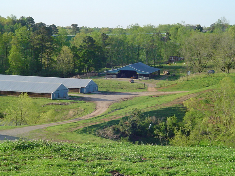 Ranburne, AL: Rural Farm chicken houses, barn and cows