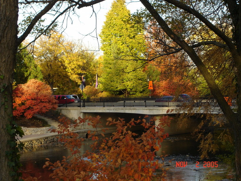Naperville IL  Fall Color In Naperville Photo Picture