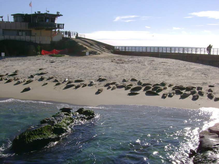 seal beach. San Diego, CA : Seal Beach in