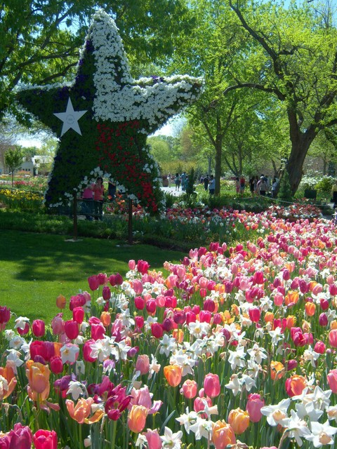Dallas, TX : The Arboretum