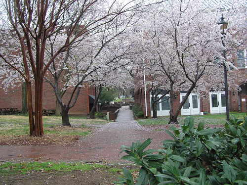 Davidson, NC : Spring 2009, Knox Court, Davidson NC