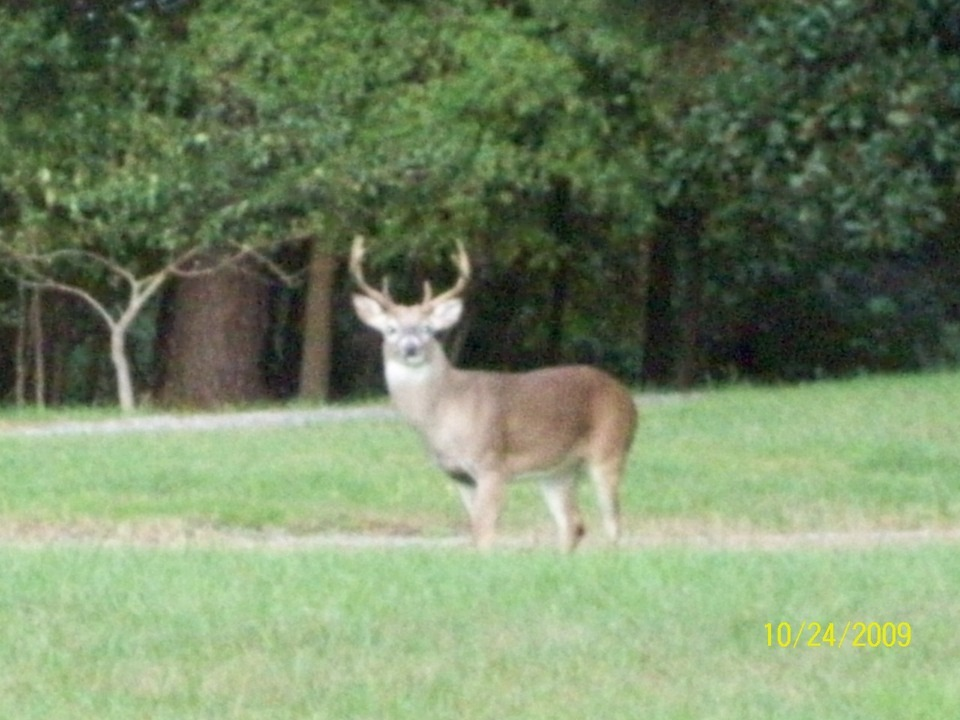 Rome, GA : berry buck
