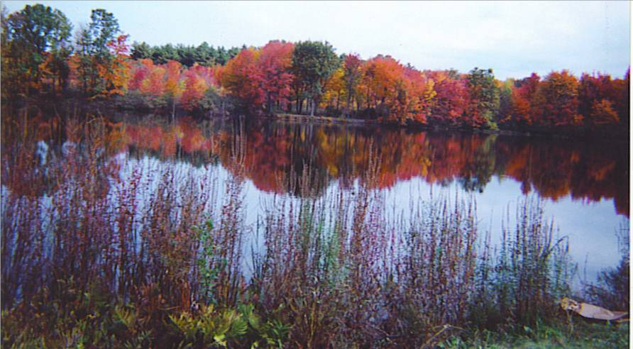 Millis, MA: Richardson's Pond in the fall