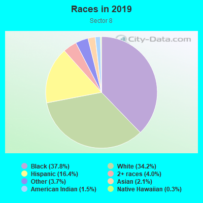Races in Sector 8 in Rochester neighborhood in NY